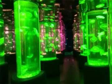 2018 dodavatel akrylové medúzy