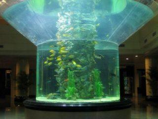 pmma sklo akvárium poloviční válec plexisklo transparentní rybí nádrž