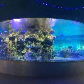 tovární dodávka rybí mísy, akvária z kulatého skla