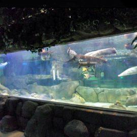 Individuální luxusní design pod vodou Tlusté akrylové panely Okno akvária Skleněná tabulka