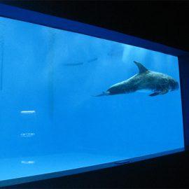 vysoce kvalitní Velké akrylátové akvarijní / bazénové podvodní okno s tlustými okny