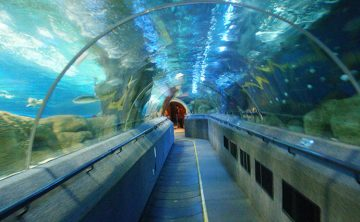 Akrylový tunel
