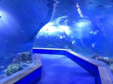 Jasný pmma akryl Velký plastový tunel akvária