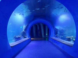 Vysoce čisté velké akrylové tunelové akvárium různých tvarů