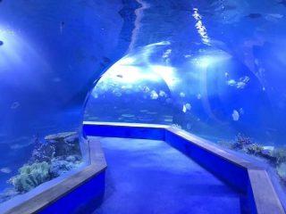 transparentní akrylové sklo Tunelové akvárium